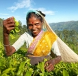 Zájezd Srí Lanka a Maledivy