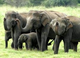 Sloní safari Minneriya, Srí Lanka