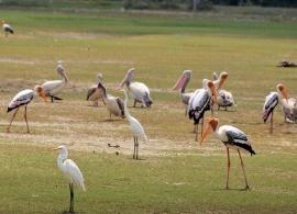 barevní ptáci v Jaffně