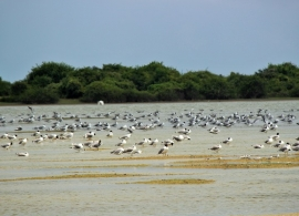 příroda v Jaffně