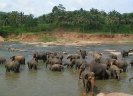 sloní útulek Pinnewala Srí Lanka