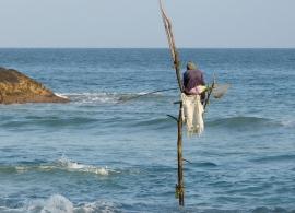 rybář na kůlu Srí Lanka