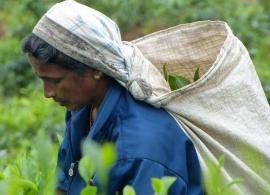 Zájezdy Srí Lanka - čajové plantáže