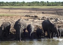 sloni v Udawalawe Srí Lanka