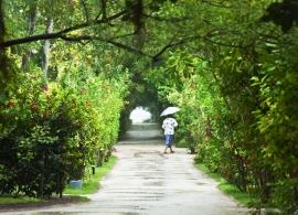 Adaaran Select Hudhuran Fushi - ostrovní vegetace