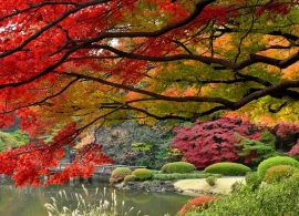 Japonsko - podzim
