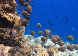 Oblu Helengeli - korálový útes