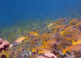 Reethi Faru resort - podmořský život