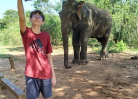 slon u silnice