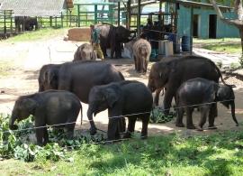 Elephant transit home, Uda Walawe