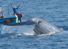velryba v Mirisse