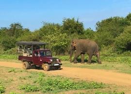 sloní safari Uda Walawe