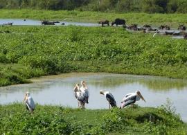 Národní park Uda Walawe