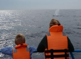 pozorování velryb v Mirisse