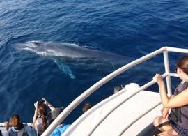Modrá velryba na Srí Lance