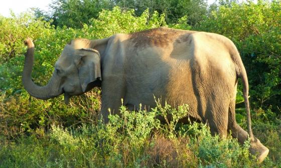 Zájezd Srí Lanka s dětmi