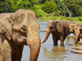 Osobní rozvoj na Srí Lance a Maledivách