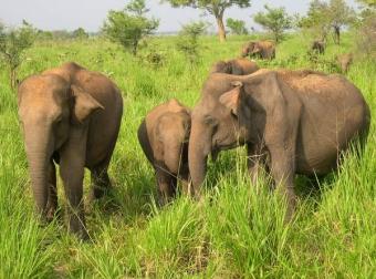 Zájezdy Srí Lanka - sloni