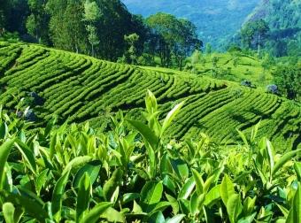 Srí Lanka a Maledivy - zájezd od specialistů