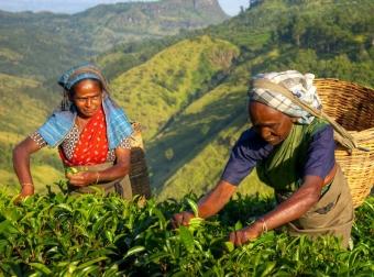 Zajezdy Srí Lanka - sběračky čaje
