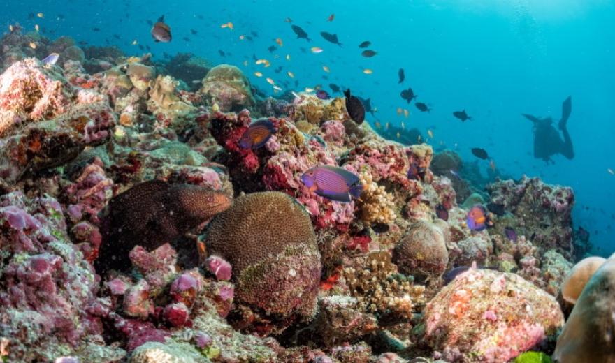 Podmořské restaurace na Maledivách