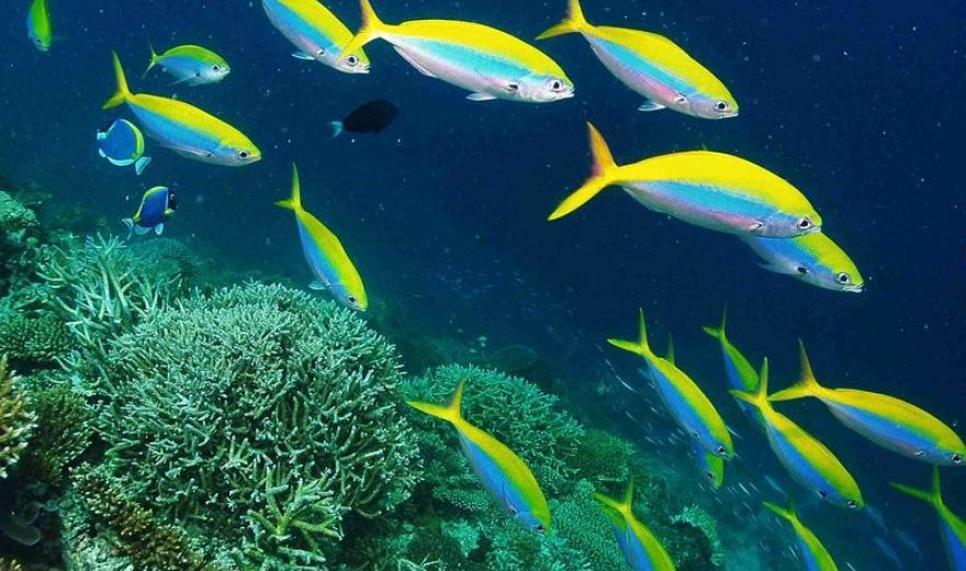 Šnorchlovací plavby Maledivy