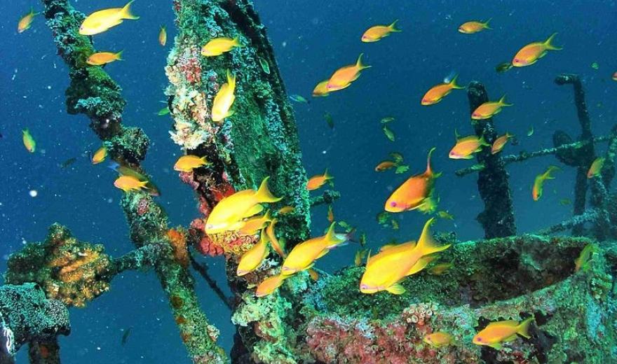 Potápěčské plavby Maledivy