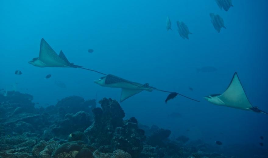 Výletní potápěčské plavby - safari cruise