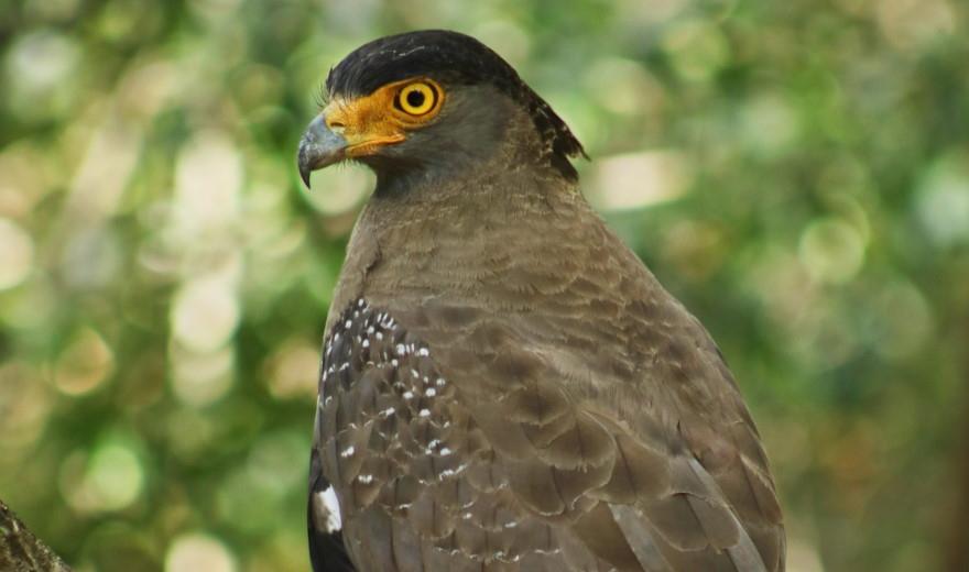 Jaká zvířata jsou k vidění v národním parku?