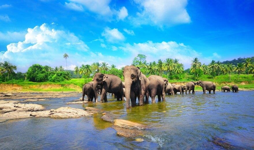 Sloní útulek Pinnewala