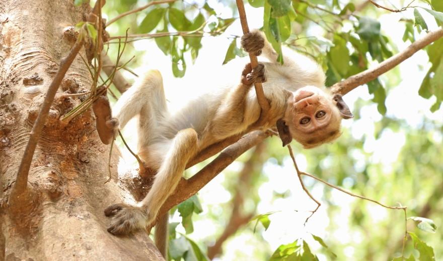 Národní park Yala Srí Lanka