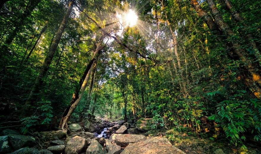 Kitulgala Rainforest - trek skrz bujný deštný prales