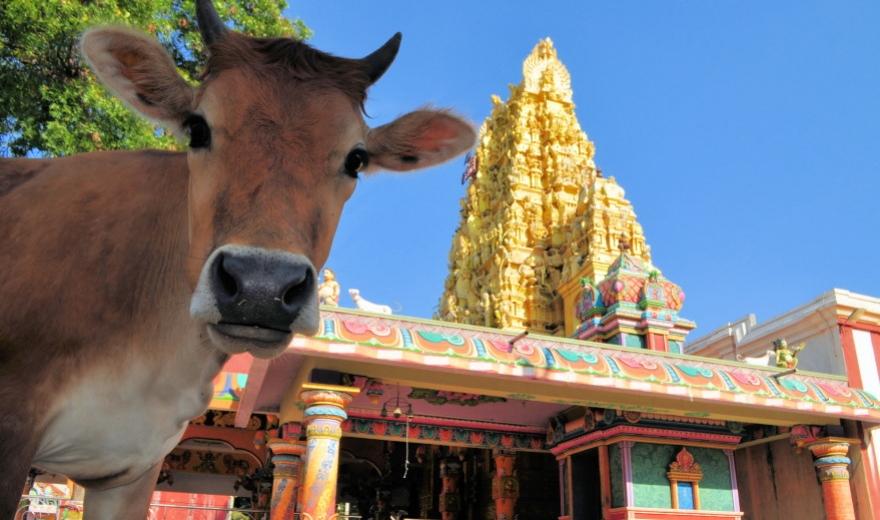 Zajímavosti ostrova Srí Lanka